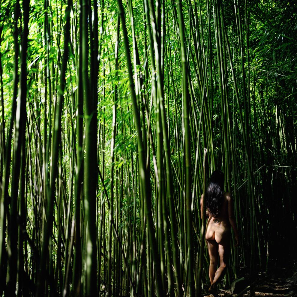Bambooforest 1