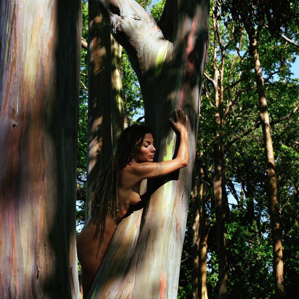 Rainbowtree 2